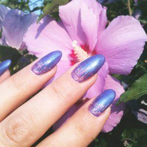 Hibiskusblüte: Pink und lila schimmernd